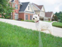 The Best Underground Dog Fences