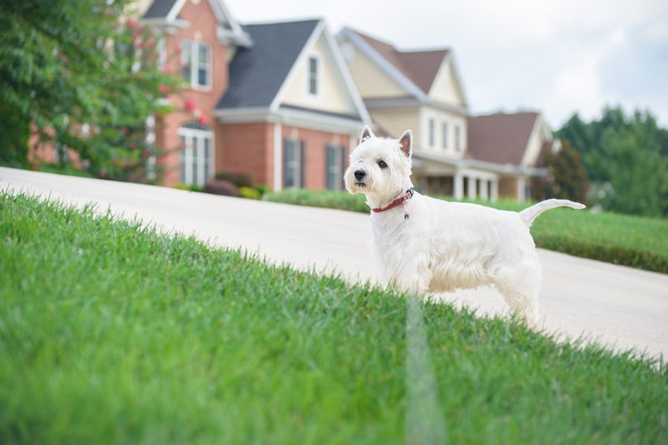 The Best Underground Dog Fences