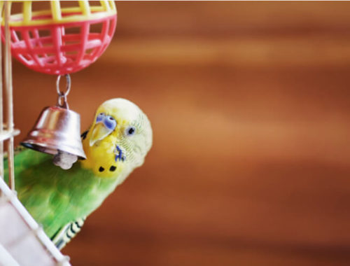 The Best Bird Toys