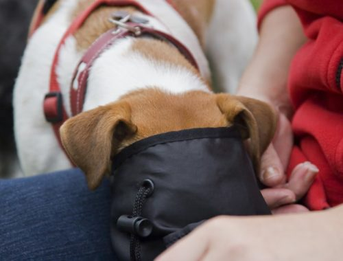 The Best Dog Treat Pouches and Bags