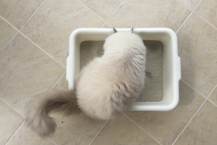 The Best Sifting Litter Boxes