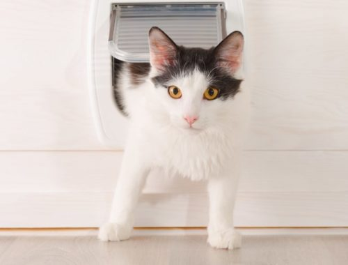 The Best Cat Doors and Flaps
