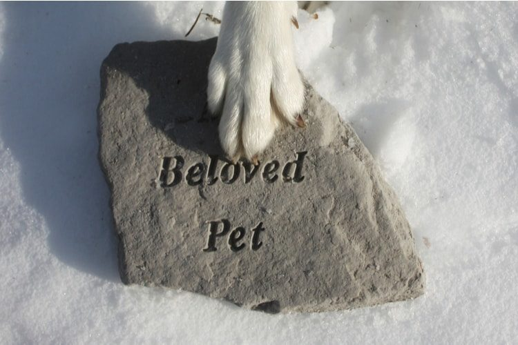 The Best Pet Memorial Stones