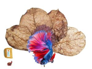 FANCYTE Indian Almond Leaves