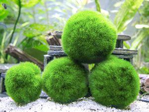 Aquatic Arts 1 Inch Marimo Moss Balls