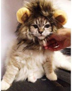 DOGLOVEIT Lion Mane