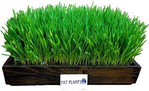 FATPLANTS Complete Organic Wheatgrass Kit