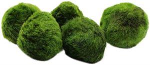 Overstep Live Moss Ball