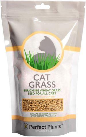 Perfect Plants Cat Grass Seeds