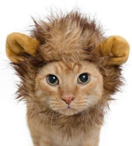 Pet Krewe Lion Mane Costume