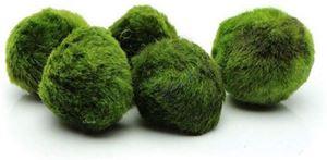 Pevor Marimo Moss Balls