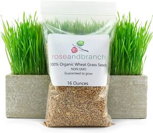 Rose and Branch Organic Wheat Grass Seeds