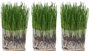 The Cat Ladies Compostable Cat Grass Grow Bag Kit