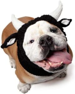 Bull Dog Costume by Zoo Snoods