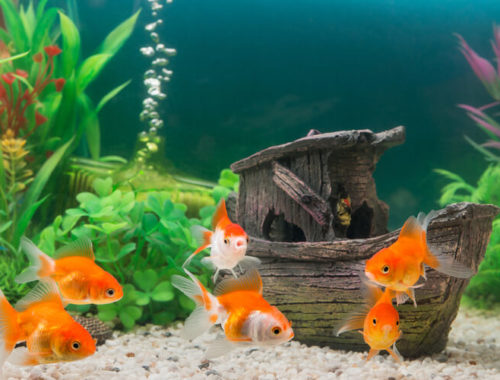 The Best Aquarium Decor