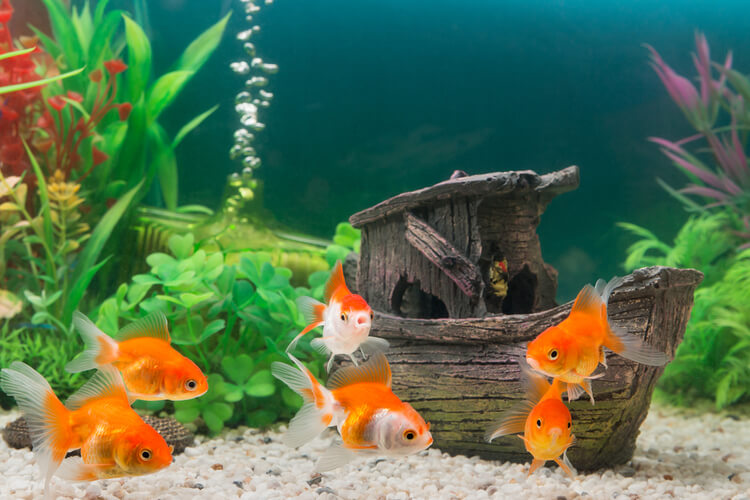 The 25 Best Aquarium Decor Of 2020 Pet Life Today