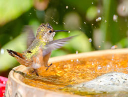 The Best Bird Baths