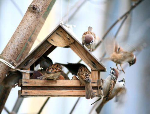 The Best Bird Houses