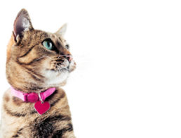 The Best Cat Collars