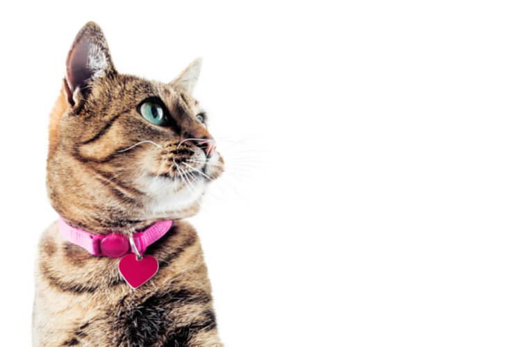 Los mejores collares para gatos