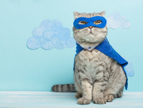 The Best Cat Costumes