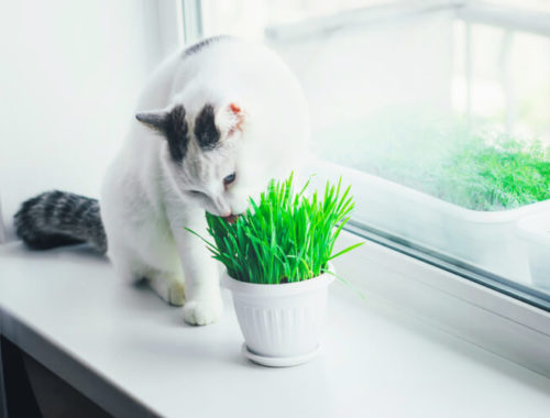 The Best Cat Grass