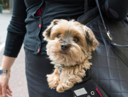 dog-carrier-purse
