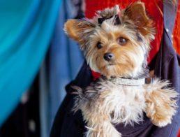 The Best Dog Carrier Slings
