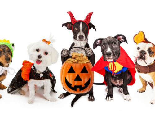 The Best Dog Halloween Costumes