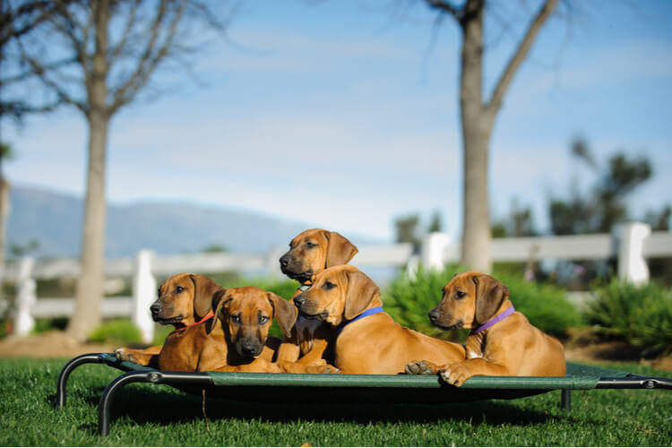 The Best Elevated Dog Beds