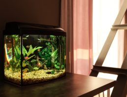 The Best Fish Tanks