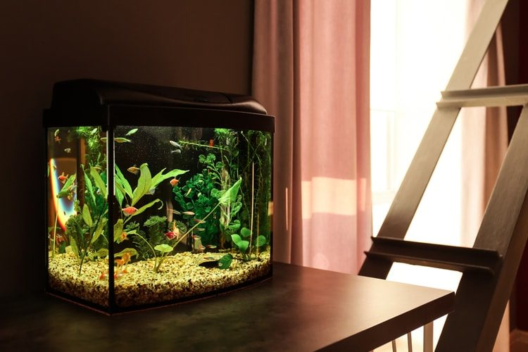 The 25 Best Fish Tanks Aquariums Of