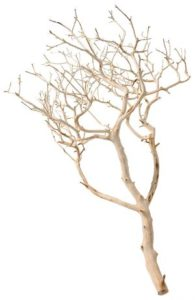 Pisces Manzanita Driftwood