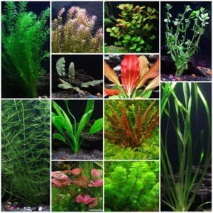 12 Species Live Aquarium Plants Package
