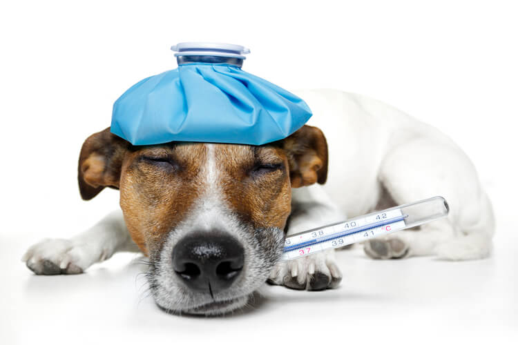 Los mejores termómetros para perros