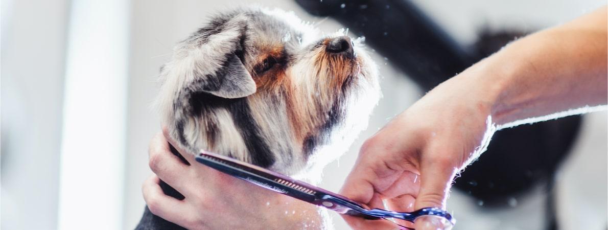 Pet being groomed