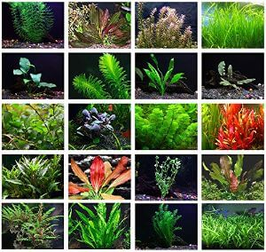 Texas Aquarium Plant Bundle