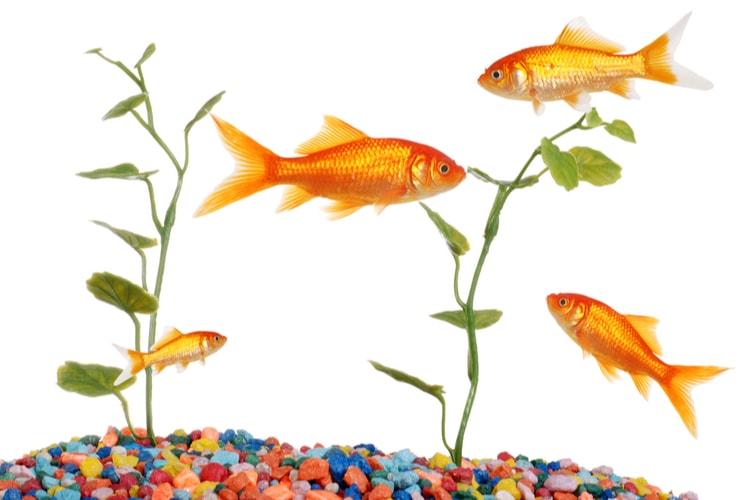 La mejor grava para acuario
