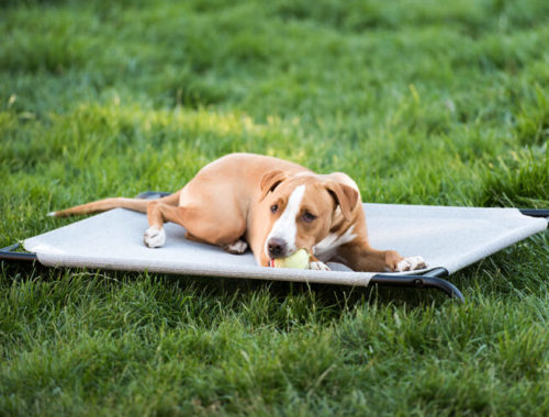 The Best Chew Proof Dog Beds