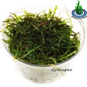 Greenpro Java Moss