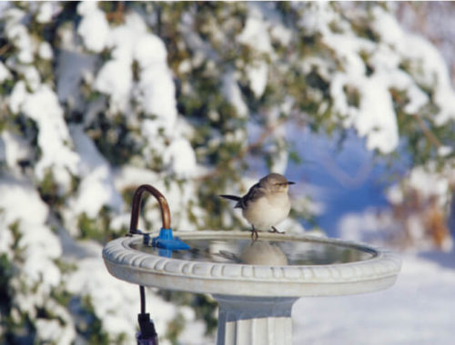 The Best Heated Bird Baths