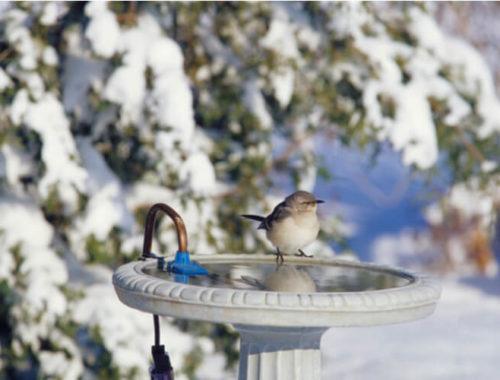 The Best Heated Bird Baths