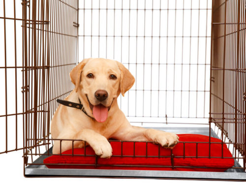 The Best Heavy Duty Dog Crates