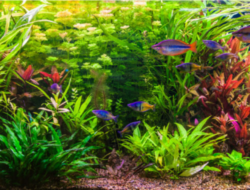 The Best Live Aquarium Plants