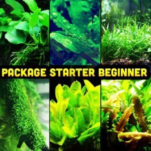 Mainam 30+ Stems Package Beginner Set