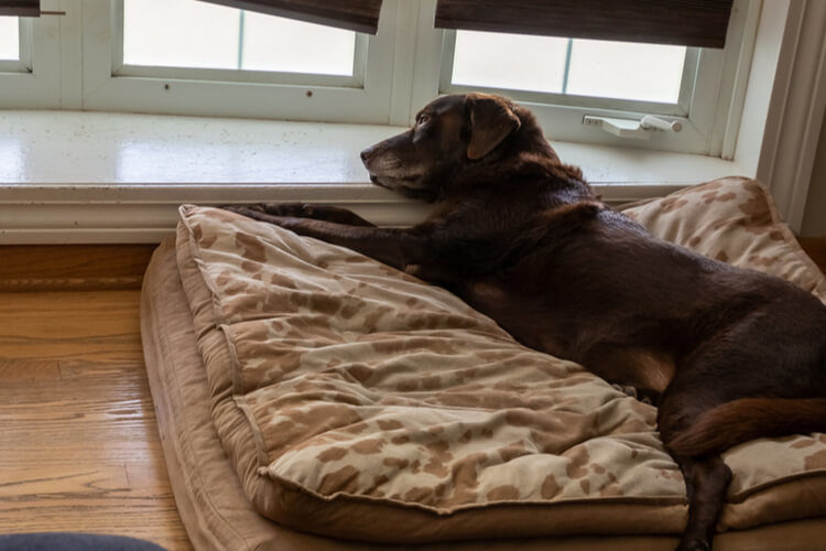 The 25 Best Orthopedic Dog Beds Of 2020 Pet Life Today