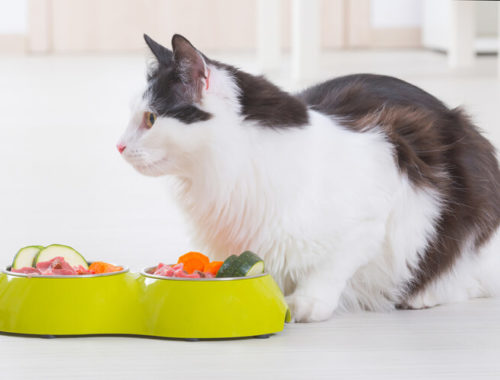 The Best Raw Cat Food