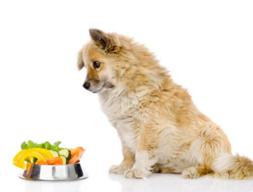The Best Vegan Cat Foods