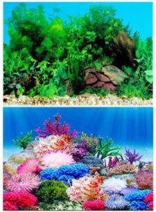 Amakunft Coral Reef Aquarium Background