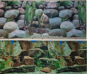 Karen Low Fish Tank Background